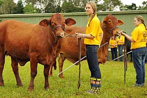 Beef Cattle Handling School